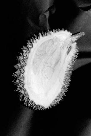 17ss-ed-noon-lysonmarchessault-chrisrhodes-jpegs-01